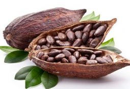 Kakaonun mucizevi faydaları