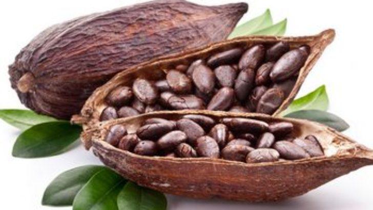 Kakaonun Faydaları