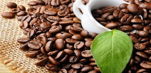 Dibek kahvesi faydaları