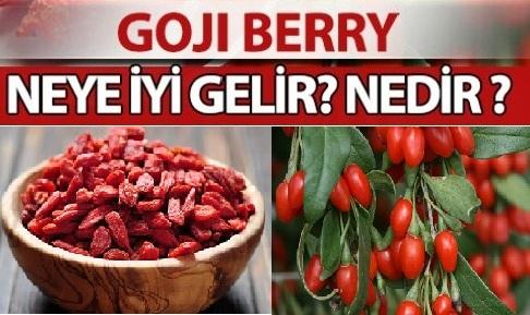 Kurt Üzümü (Goji Berry)'nin Faydaları Nelerdir?