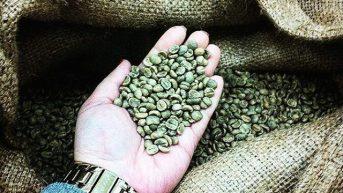 Yeşil kahvenin faydalarını