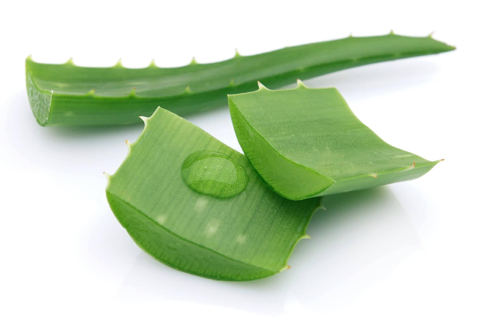 aloe vera bitkisinin faydalari