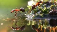 Karıncalardan Nasıl Kurtulunur?