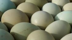 Yeşil Kabuklu Yumurtanın Faydaları