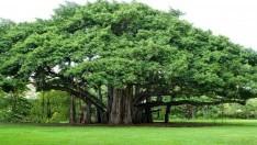 Ağaçların Faydaları